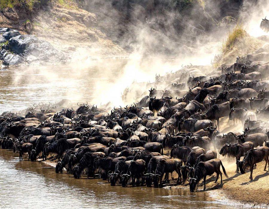 5-days-serengeti-migration-safari